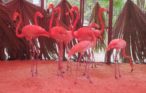 flamingo-arrival-01